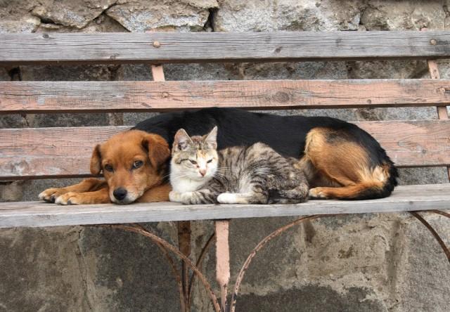 Владельцам собак придется стать ответственнее