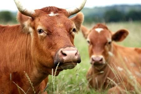 В Верхнебуреинском районе состоится обсуждения государственной программы Хабаровского края «Развитие сельского хозяйства и регулирование рынков сельскохозяйственной продукции, сырья и продовольствия в Хабаровском крае на 2013 – 2020 годы»